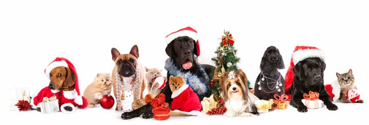 Holiday Dog Walking and Holiday Pet Sitting